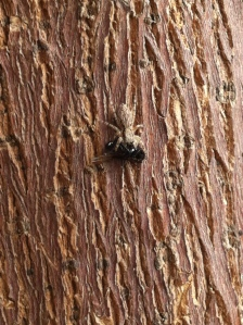 Esta foto la tomé esperando a mi novio afuera de su residencia. Perdía el tiempo viendo a la araña y me di cuenta que esta había atrapado una mosca, Rápidamente saque mi teléfono y le tomé varías fotos. Me fascina fotografiar animales y esta oportunidad no la podía dejar pasar.